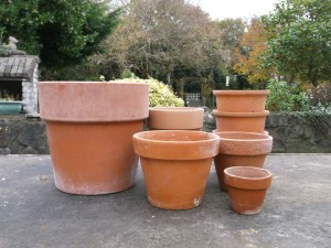 Clay Pots Are Great For People Starting Out In The Hobby As They Porus And Let Soil Medium Inside Pot Dry Much Quicker Than Plastic